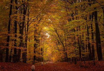 Herbstwald von Jeroen te Lindert