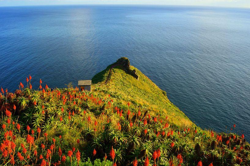 Kust van Madeira van Michel van Kooten