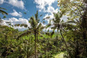 Landschap van jonge water gegeven ricefield met wat kokospalm in het eiland van Bali.