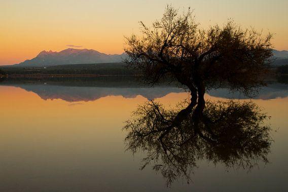 The Tree Reflection van Cornelis (Cees) Cornelissen