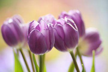 purple dancers von