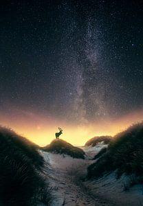 Damhert onder de sterren (Melkweg) von