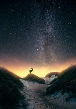 Damhert onder de sterren (Melkweg) von marco jongsma