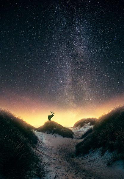 Damhert onder de sterren (Melkweg) van marco jongsma