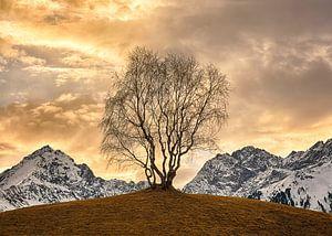 Gouden boom van