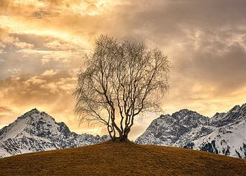 Goldene Baum von Christa Thieme-Krus