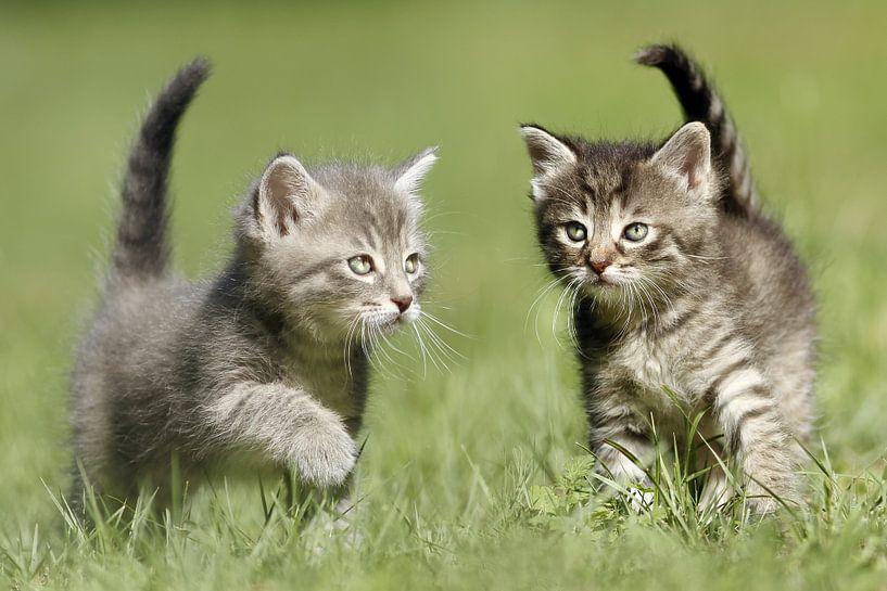 Katzen von Heiko Lehmann