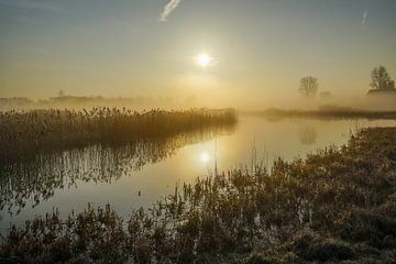 Sonne einschalten von Dirk van Egmond