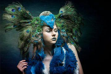 Peacock sur Allard Kamermans