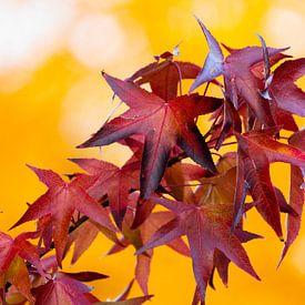 Herbstlaub von Meleah Fotografie
