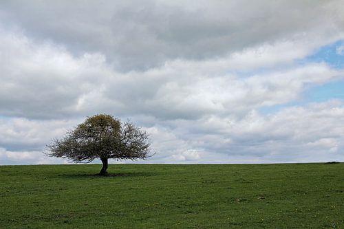 Dé boom van