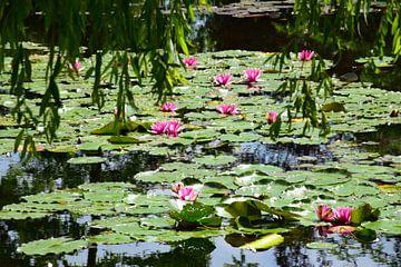 Waterlelies van Monet van Ingrid de Vos - Boom