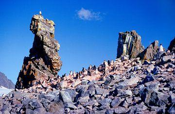Half Moon Island - analoge fotografie! van Tom River Art