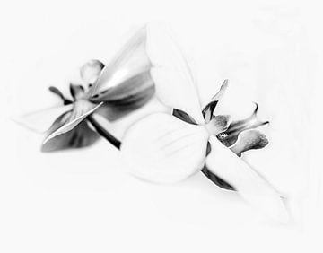 Orchideeën in zwart wit van