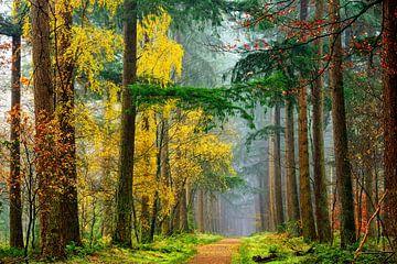 Kleuren van het Bos van Lars van de Goor
