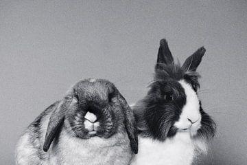 konijnen van Charlotte van de Zande