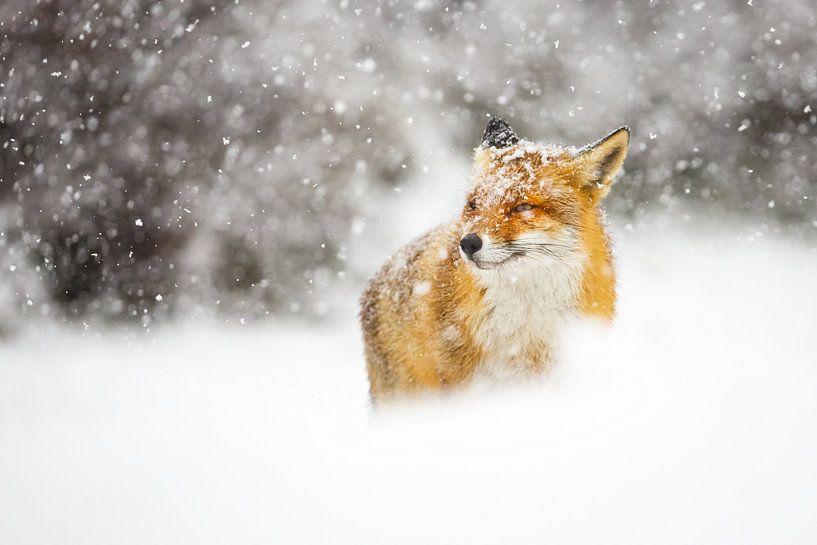 Sneeuwstorm van Pim Leijen