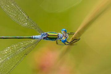 Blauwe ogen van Richard Guijt Photography