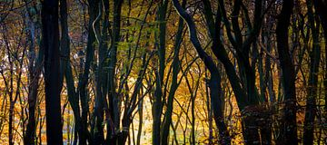 Gouden silhouetten in de ochtend von Niels Eric Fotografie