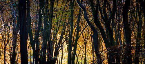Gouden silhouetten in de ochtend van