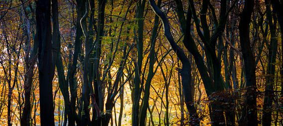 Gouden silhouetten in de ochtend