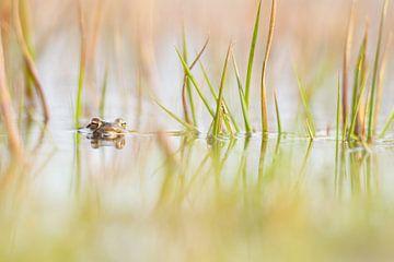 Frosch von Francis Dost