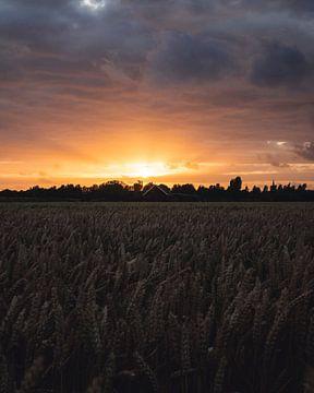 Sonnenuntergang über Getreidefeld von Joren van den Bos