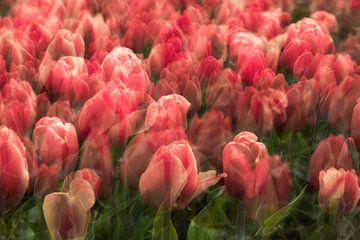 Dromerige tulpen van Dennisart Fotografie
