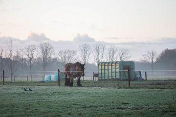 Arbeitspferd auf der Wiese von Tania Perneel