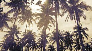 Palmbomen tegen een ondergaande zon in Thailand