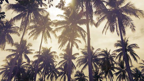 Palmbomen tegen een ondergaande zon in Thailand van Susanne Pieren-Canisius