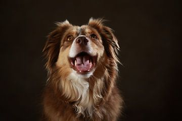 Hond van Jana Behr