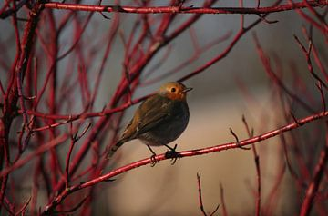 Happy bird van Henriëtte Kelderman-Makaaij