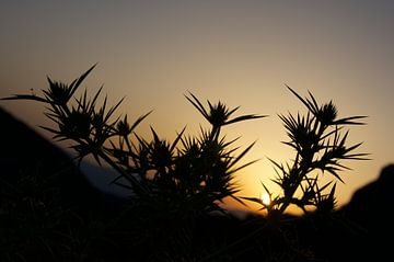 Provence. Zonsondergang van Willem Holle WHOriginal Fotografie