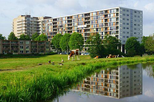 Holland van Michel van Kooten