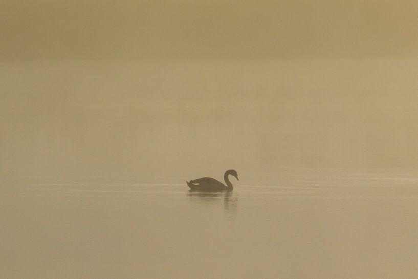 Silhouet zwemmende zwaan in de ochtendnevel van Photo Henk van Dijk