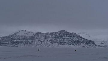 Einsame Rentiere im Winter von Timon Schneider