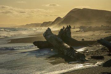 Sonnenuntergang über dem Strand mit an Land gespülten Bäumen in Neuseeland von Paul van Putten
