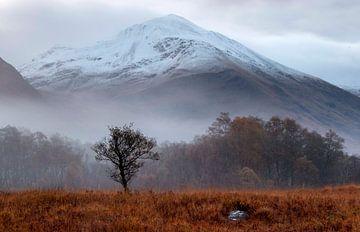 Mist aan de voet van de Ben Navis, Schotland. von Guido Boogert