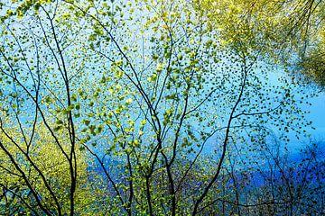 blauw landschap in de lente van