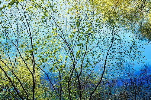 blauw landschap in de lente
