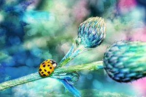 Marienkäfer in Blau