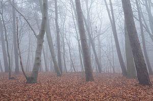 Bos in de mist van