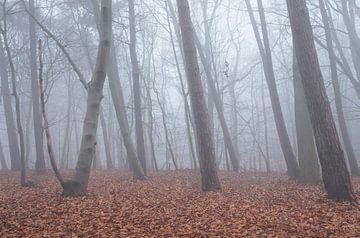 Bos in de mist sur Elroy Spelbos
