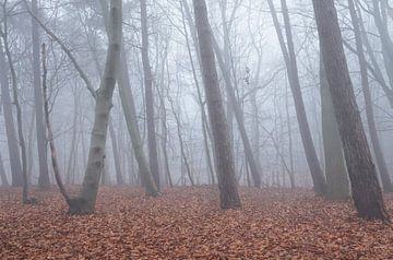 Bos in de mist van Elroy Spelbos