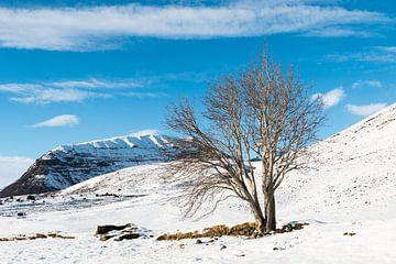 De mythologische lijsterbes van Sandfell in IJsland van Gerry van Roosmalen