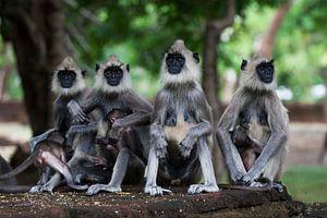 Monkey business van