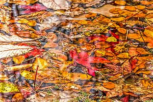 Collage d'automne