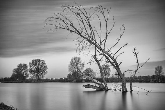 Dode boom in het water
