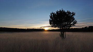 De rust van een zonsondergang  van Moor van Bree foto's
